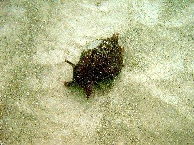 A sea slug.