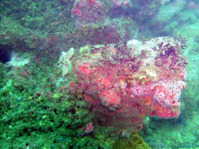 A colorful reef off Long Point.