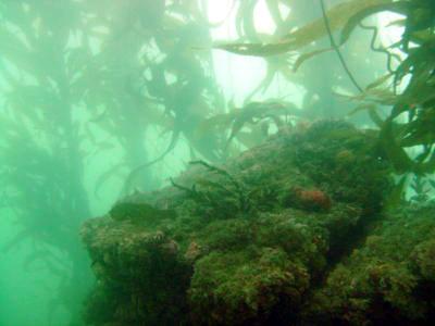 120 reef.