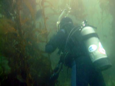 A diver in kelp.