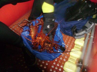 Jim's Lobsters