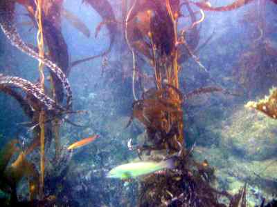 Abundant sea life.
