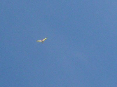 An Ultralight passed over head - how cool!