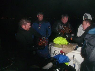 Divers count their lobsters.