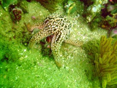 A starfish eats.