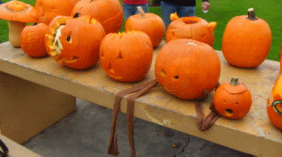 The Pumpkins await judging