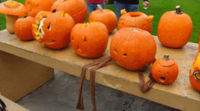 The Pumpkins await judging