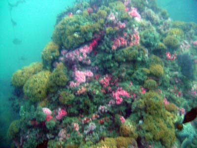 Reef at Tarranea.