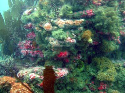 Reef at Terranea.