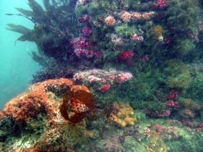 Reefs at Terranea.