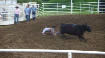 Cow falling.